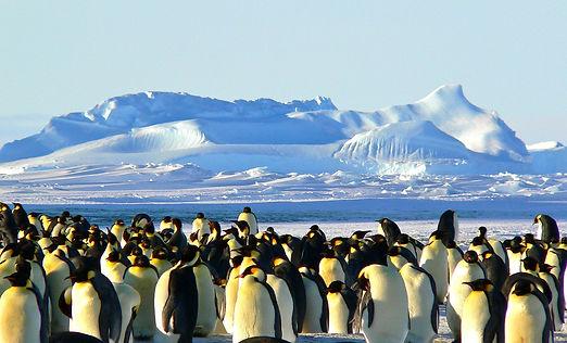 emperor-penguins-antarctic-life-animal-4