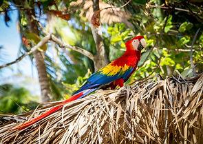 #9 beautiful birds of costa rica fun facts.jpg