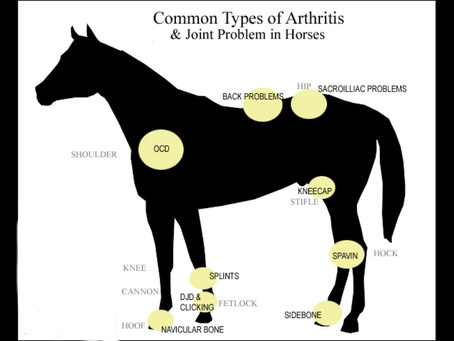 A Physiotherapists top tips on managing arthritis in your horse