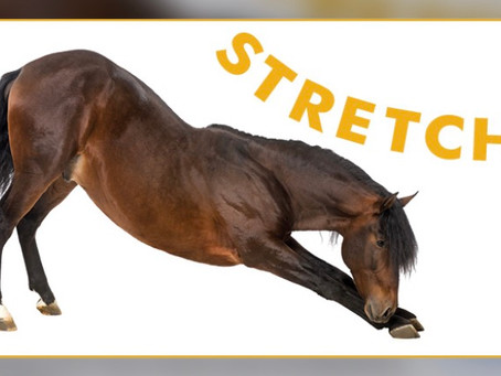 Carrot stretches 🥕 … what's the point?