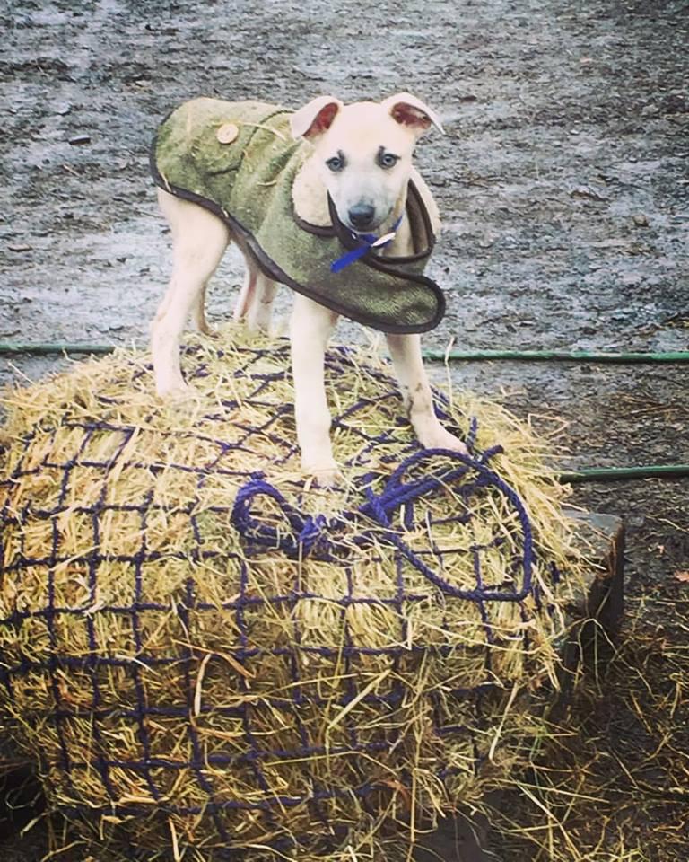 herb puppy.jpg
