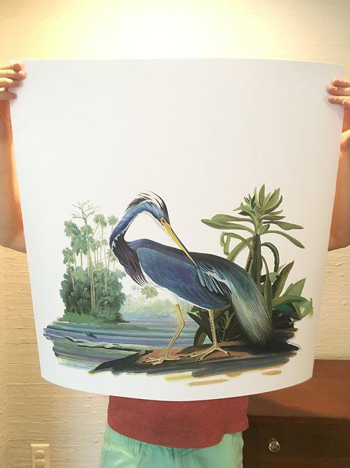 Louisiana Heron (after Audubon)