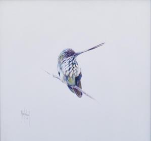 Tooth-billed Hummingbird.