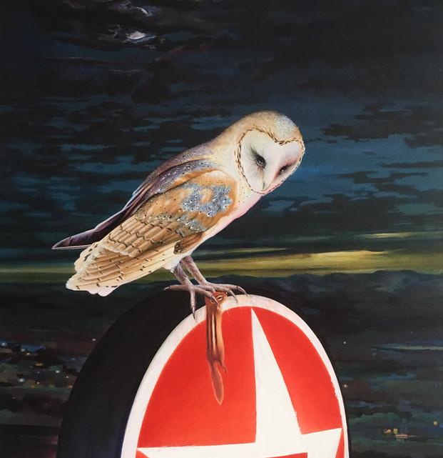 Barn Owl With Chipmunk