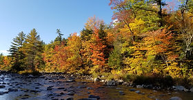 Beautiful foliage season on the Swift River