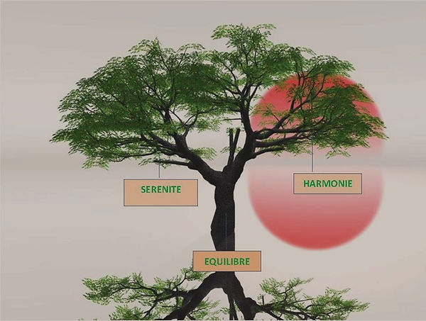 LA-SOPHROLOGIE-arbre 2.jpg