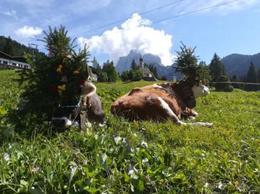 Almabtrieb Santa Fosca - Selva di Cadore (BL)