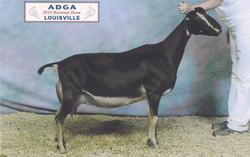 2010 ADGA Nationals