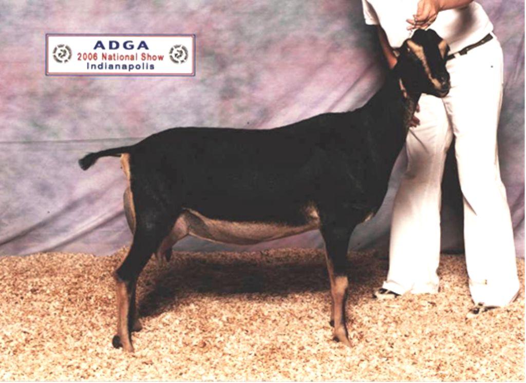 2006 ADGA Nationals