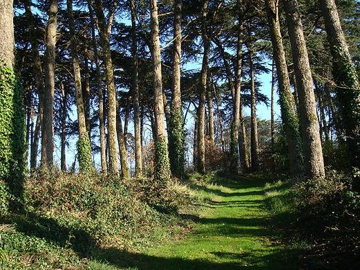 Cédraie parc de Tournelay