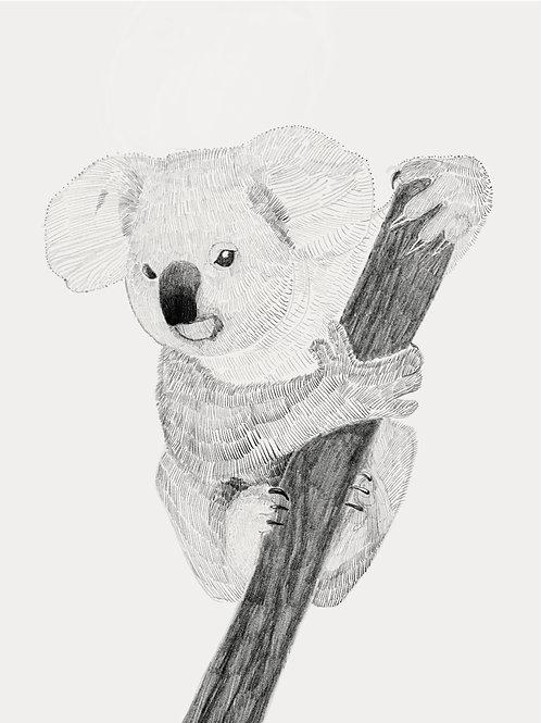 Karl the Koala
