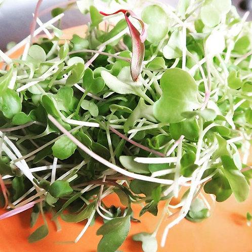 OH! Produce microgreens