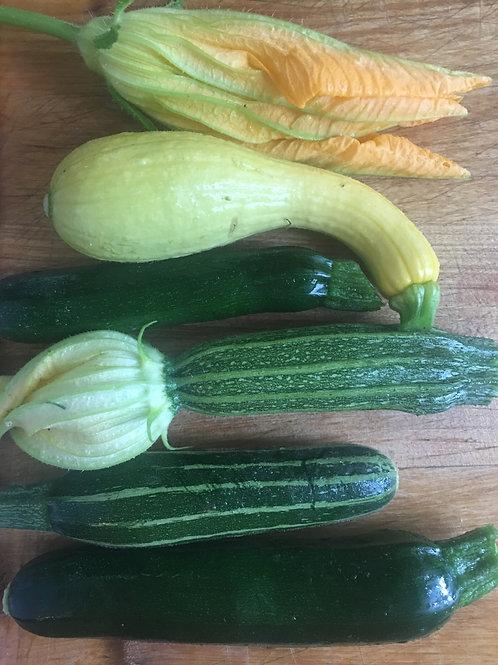 Dreamland Farmstead zucchini