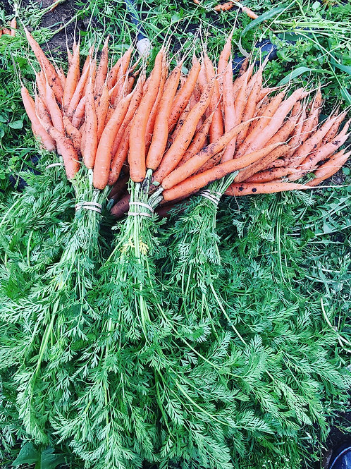 Godshall Farm carrot bunch