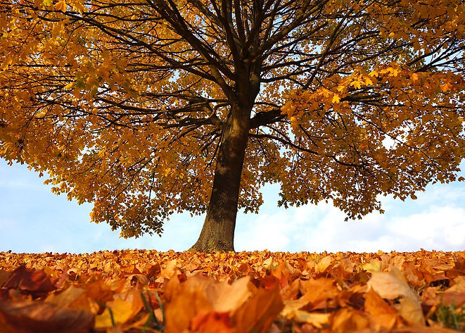 autumn-1795950_1280.jpg