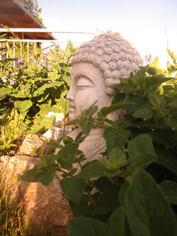 buddha in the green