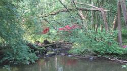 Rotes Zelt im Wald
