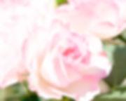 DSC02519.jpg