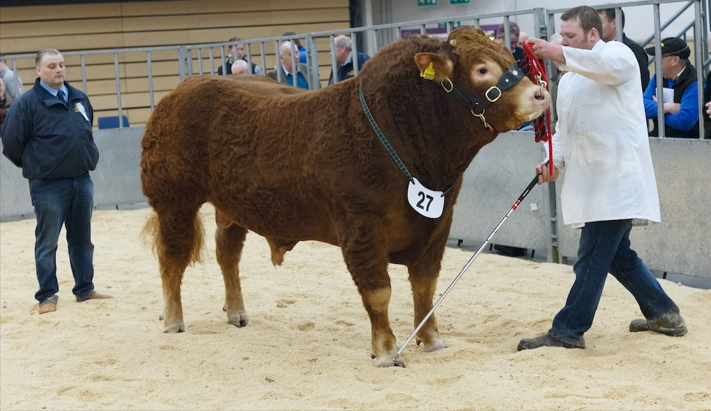 Thainstone Spring Show 2016