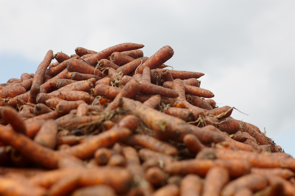 Islapark Carrots
