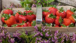 Colbeggie Strawberries