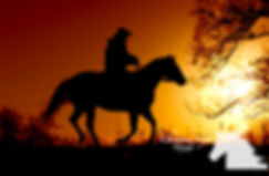 Wisconsin Pet Equine Horse Photographer Photography