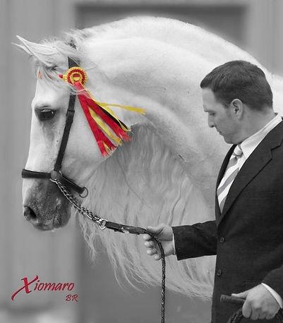 Wisconsin Horse Photographer Photography