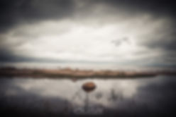 Vedette-of-the-sky.jpg