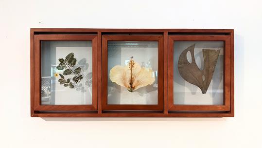 helleo_simmons_kyra_hawaiian-specimens-triptych.png