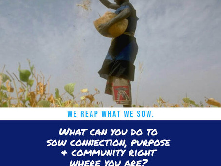 What Are You Sowing?