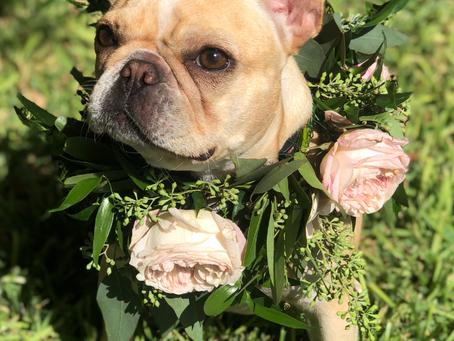 Wedding Support Dog