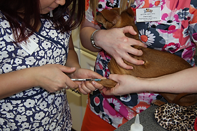Veterinary Technician helping a patient