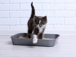 Why is My Cat Pooping on the Floor? 5 Litter Box Mistakes