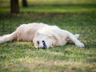 3 Reasons Your Dog Loves Rolling in Stinky Stuff