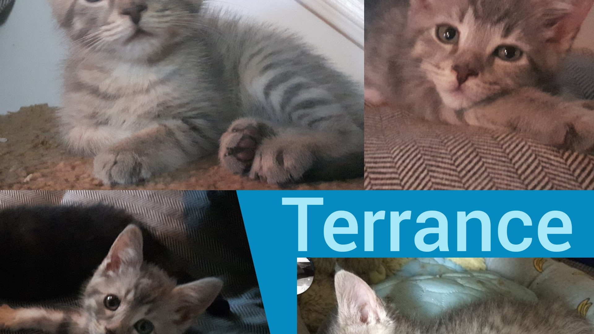 Terrance.jpg