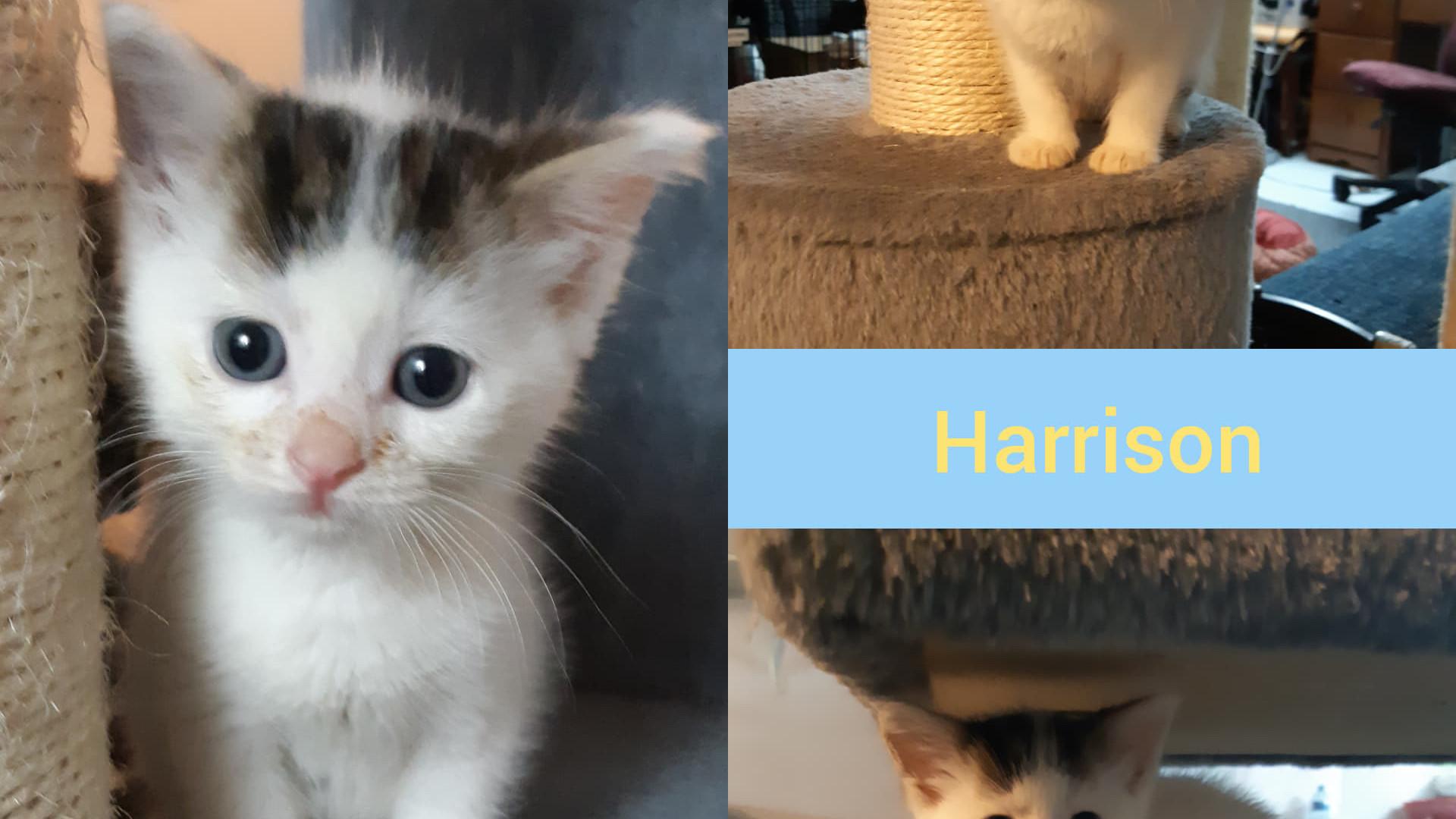 Harrison.jpg