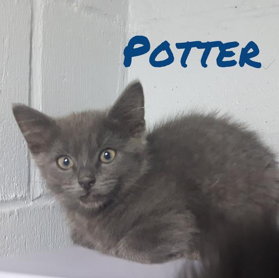Potter 1.jpg