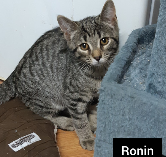 Ronin (2) - Copy.jpg