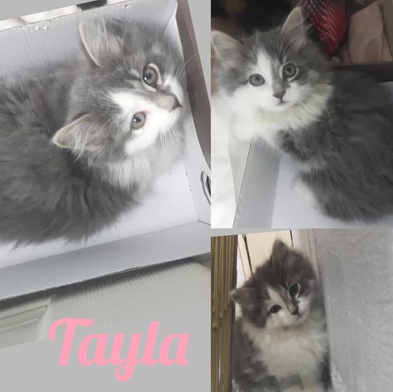 Tayla.jpg
