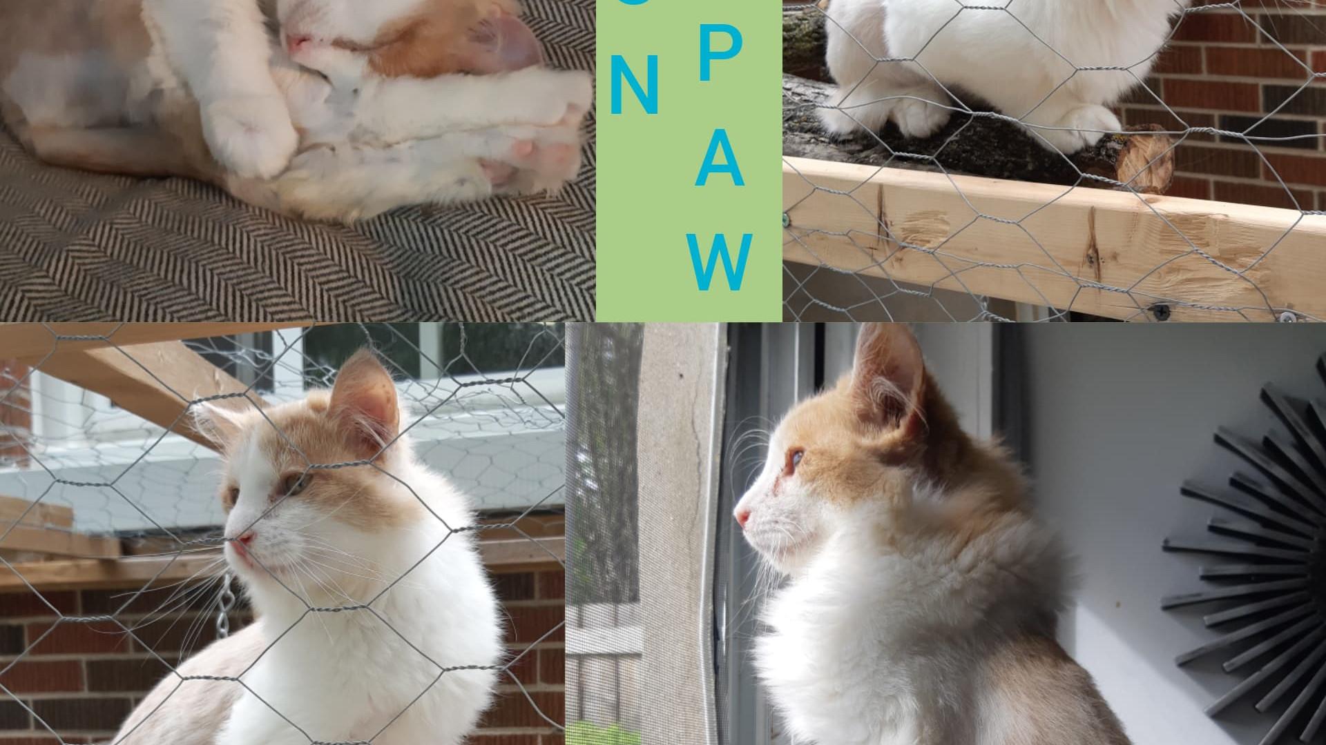 LionPaw (2).jpg