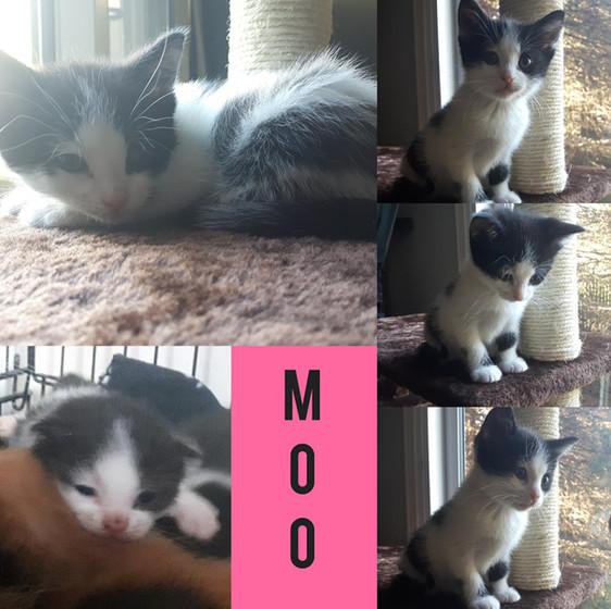 Moo (2).jpg