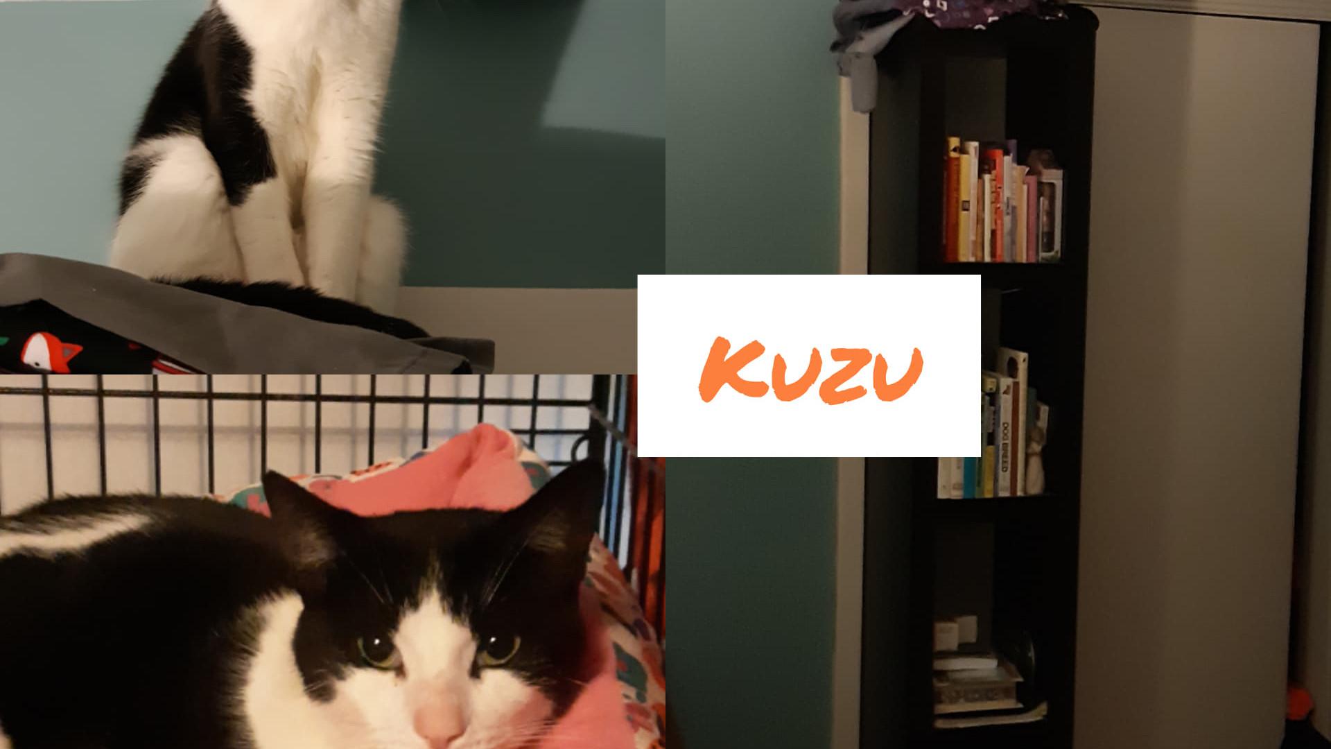 Kuzu.jpg