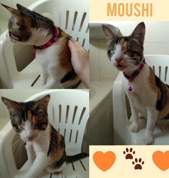 Moushi.jpg
