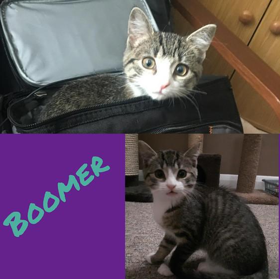 Boomer.jpg