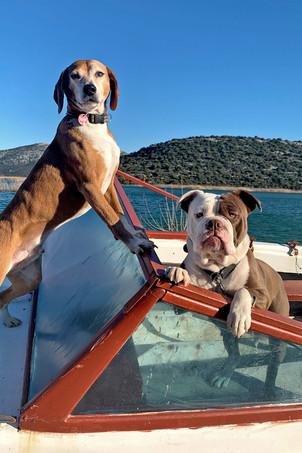 Hunde auf einem alten Bootswrack in Kroatien