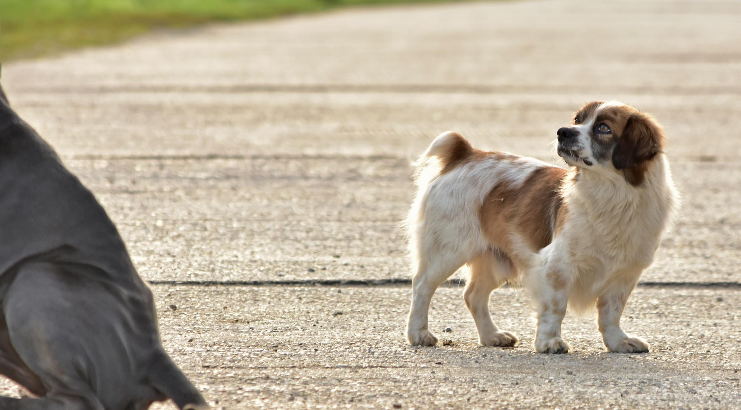 Kleiner Straßenhund am Betteln
