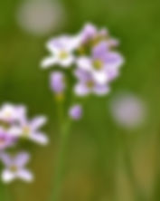 Naturheilkunde Pflanzen
