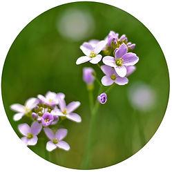 Naturheilkunde - Heilpflanzen - Hausmittel