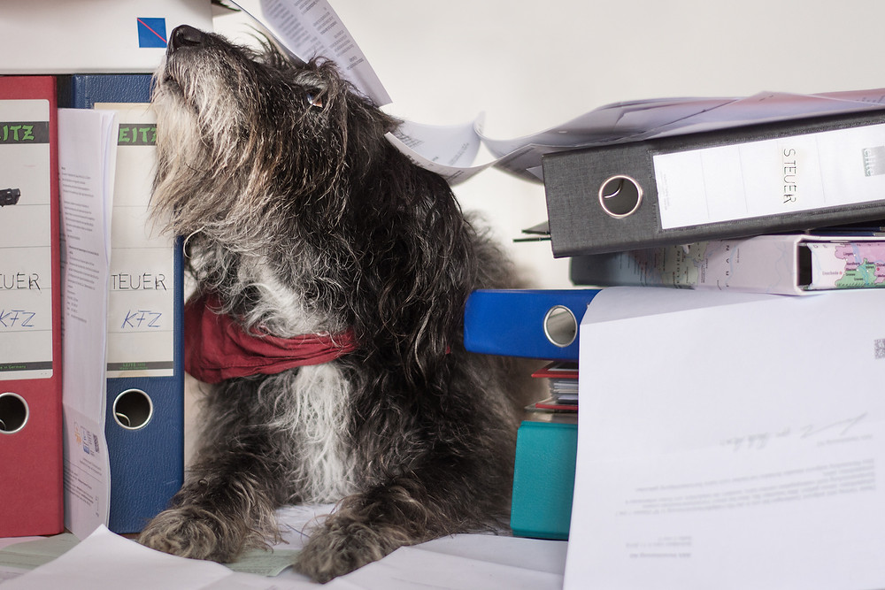 Hund zwischen Ordnern und Papierkram.