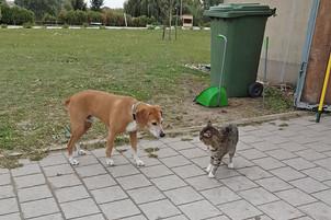 Hund Korny beobachtet die Stallkatze